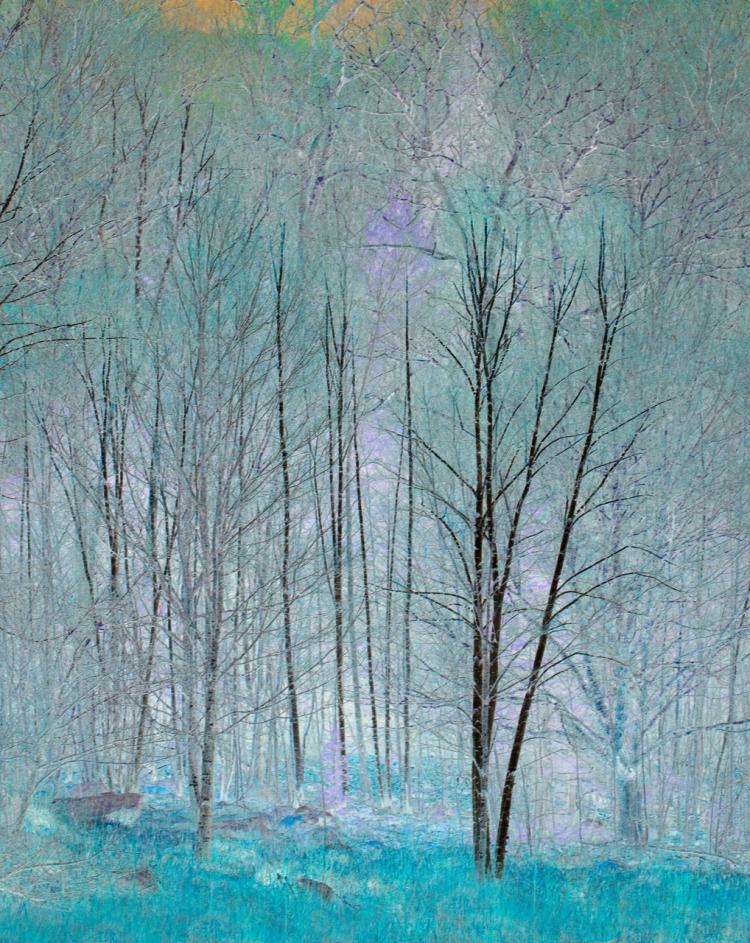 Birches Transformed by Estelle Disch