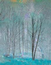Birches Transformed by Estelle Disch