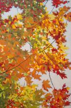 Fall Palette  by Ricardo Maldonado