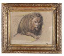 Scuola del XIX secolo, Studio di leone accovacciato