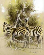 """*** Kim Donaldson (born 1952) - Pastel - """"Zebra Sketch II"""" (Mother/Young), 11.25ins x 9.5ins, signed, in painted frame and glazed Provenance: The Halcyon Gallery, 59/60, The Pallasades, Birmingham"""