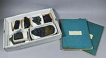 A collection of approximately fifty graptolites,