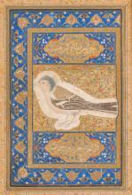 Islamic Art An illuminated page with a sparrow drawing Safavid Iran, 16th century