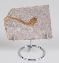 Marine Animal Fossil