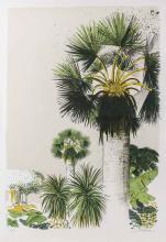 Lithograph of a Palm Tree