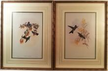 John Gould Small Hummingbirds (pair)