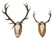 Two hunting trophies, H 88 - 110 cm