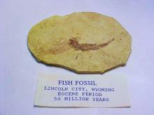 EARLY FISH FOSSIL
