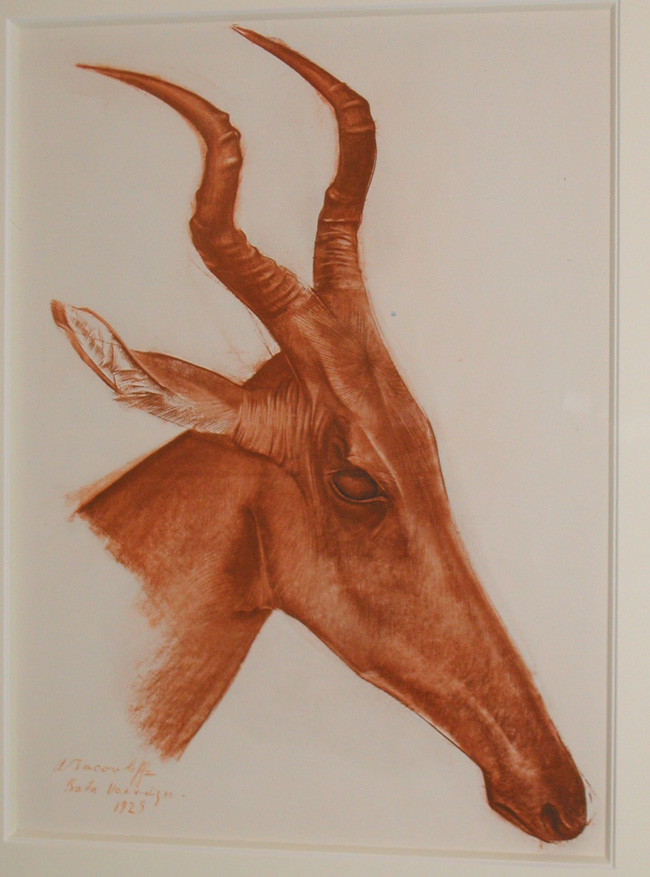 Alexander Evgenevich IACOVLEFF (1887-1938)  Antilope Jackson