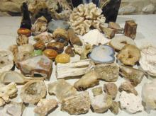 Giode petrified wood coral and seashell rock collection