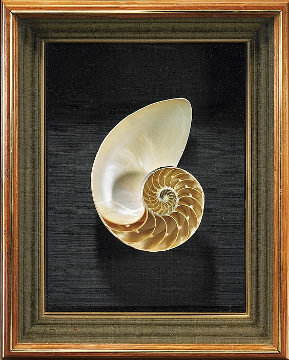 NAUTILUS DISPLAY