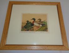 Black East Indian, Or Buenos Ayres Ducks Framed