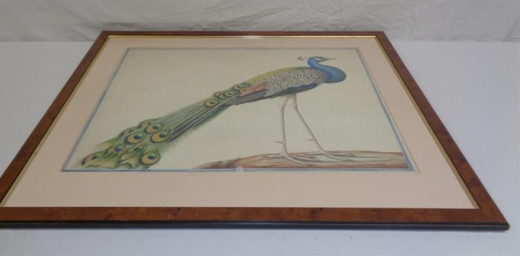 Framed Print Of Peacocks