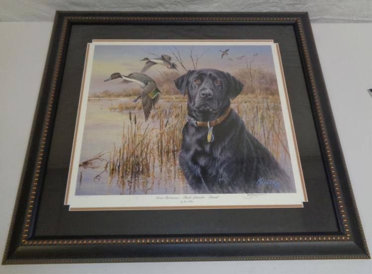 Framed Print Of Black Dog