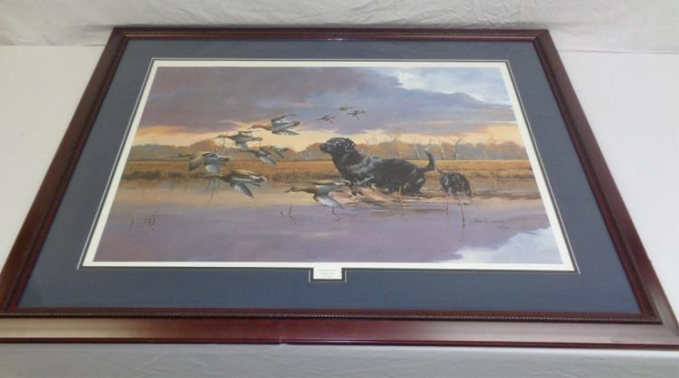 Framed Print Of Black Labadore And Ducks