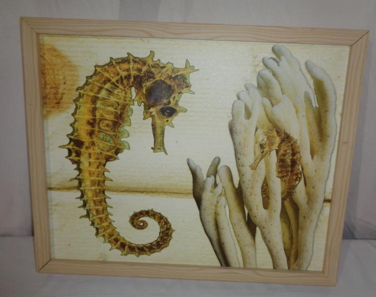 Framed Picture Of Seahorse