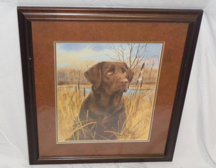 Framed Print Of Chocolate Lab