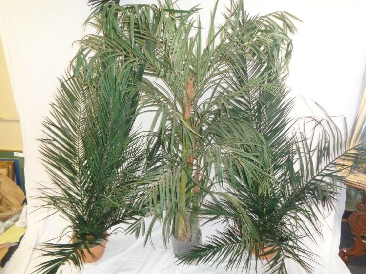 Set Of 3 Artificial Palms