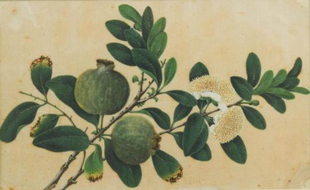 Chinese School, 19th Century  Figs on a branch