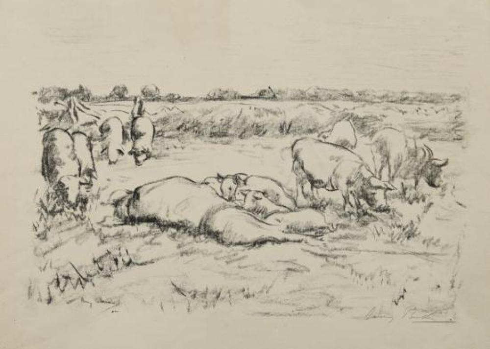 Harry Becker (British, 1865-1928)  - A sow suckling piglets in a field, with other pigs alongside - signed lower right within the print