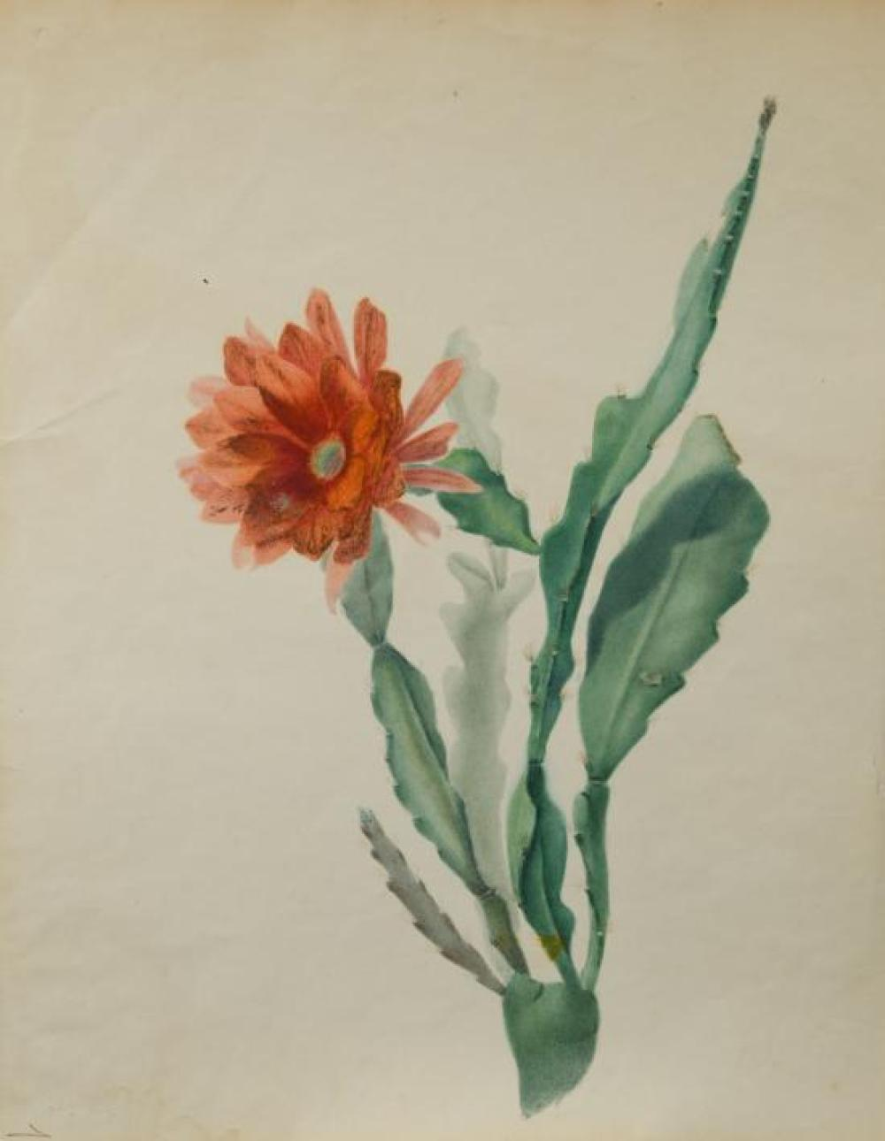 English School, early 19th Century  A collection of botanical watercolours to include A flowering cactus, 'Scarlet Horse-Shoe Gerani..