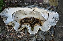 Two large clam shells.