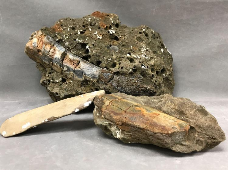 Lot of three Fossilized whale bones