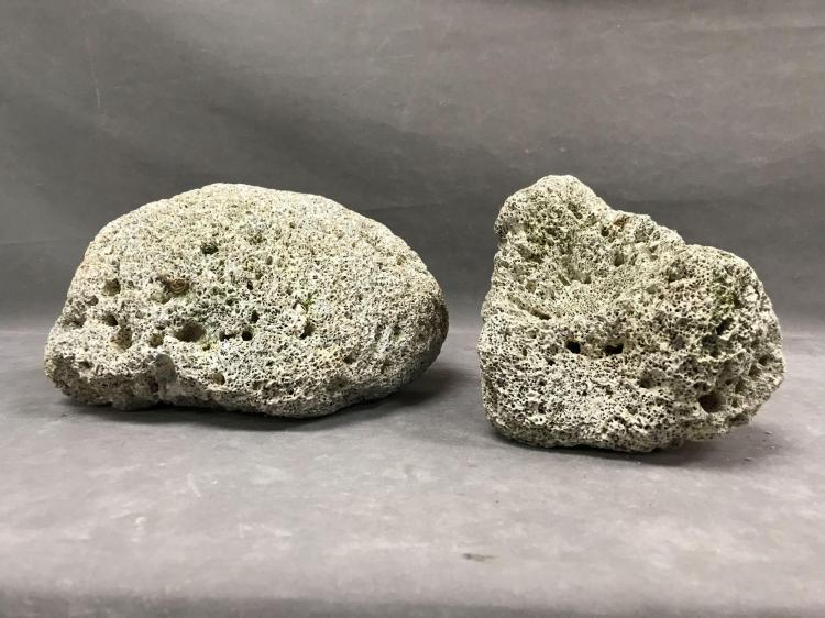 Lot of two tropical boulder corals