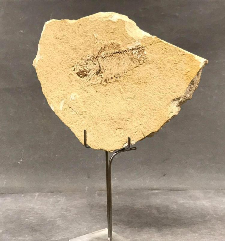 Fossilized fish and stand