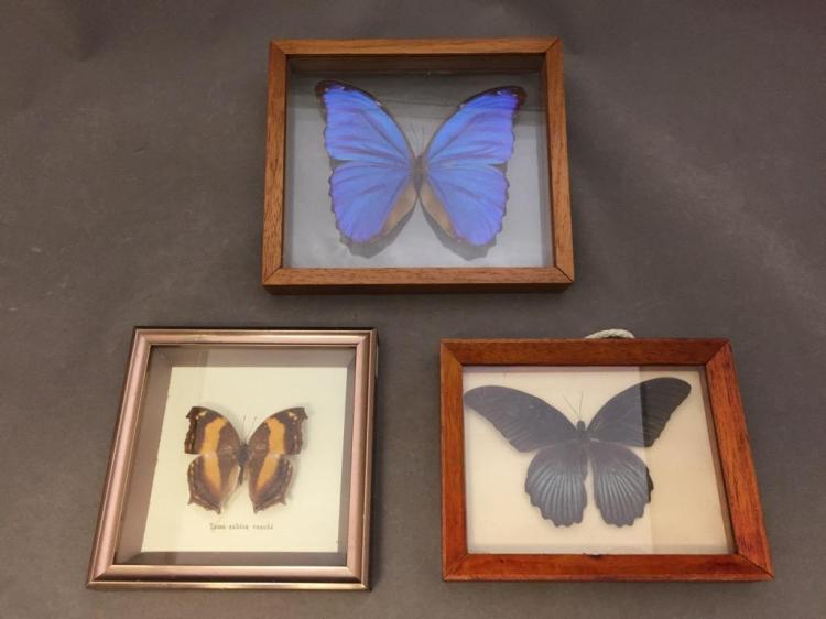 Lot of (3) butterfly displays