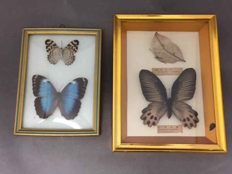 Lot of (2) butterfly displays