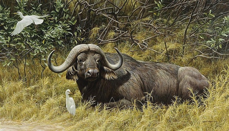 A Resting Place-CapeBuffalo' 86