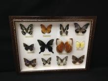 Shadow Box Display 12 Mounted Butterflies.