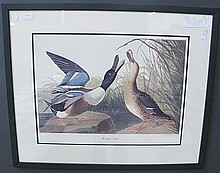 PAIR OF AUDUBON PRINTS.  Recent.  From Birds of America.  (Note:  professionally double matted and framed under glass).  28