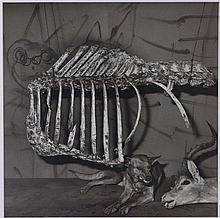 ROGER BALLEN (NE EN 1950) SNARLING DOG, 2007 Tirage gélatino argentique au