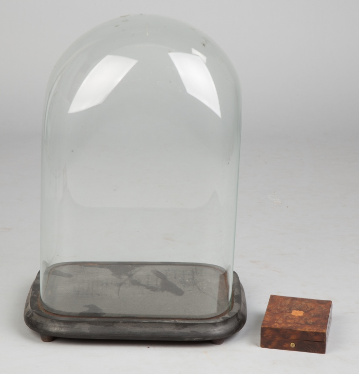 Glass Dome and Burl Case