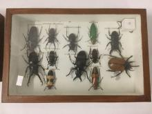 Lot 382: Lot of 2 window boxes with taxidermy beetle collection