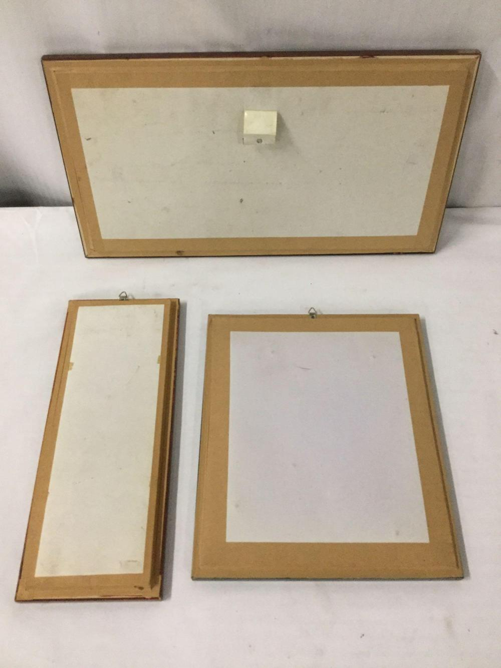 Lot 383: Lot of 3 framed taxidermy collections; butterfly and moth