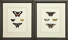 Pair of Colored Butterfly Prints, 19th c., framed, H.- 9 1/8 in., W.- 7 1/8 in.