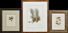 Group of Three Botanical Prints, early 20th c., of pinecones, a cactus flower, and red mushrooms, each framed. (3 Pcs.)