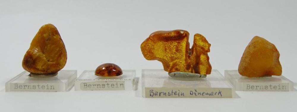 4 natürliche Bernsteinstücke auf Acrylplatten, 1 x mit eingeschloss. Termiten
