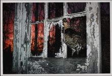 Barbara P. Norfleet: Ruffed Grouse and Abandoned House, Signed Color Print - 1985