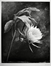 Cy DeCosse: Queen of the Night, Signed Print - 2000