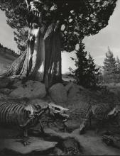 Jerry Uelsmann: Untitled (Dinosaur Bones) 1990, Signed Silver Gelatin Print