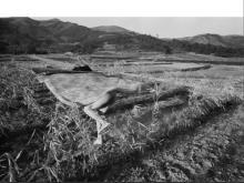 Eikoh Hosoe: Kamaitachi #27, Signed Silver Gelatin Print - 1984