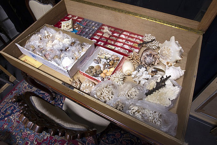 quite a large collection of minerals and shells