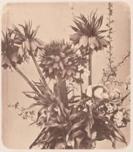 ADOLPHE BRAUN (1812-1877)