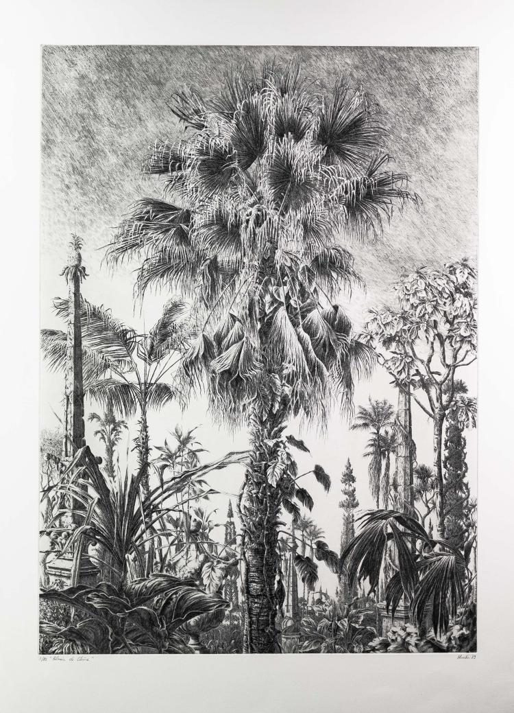 Francois HOUTIN.   Palmier de Chine.