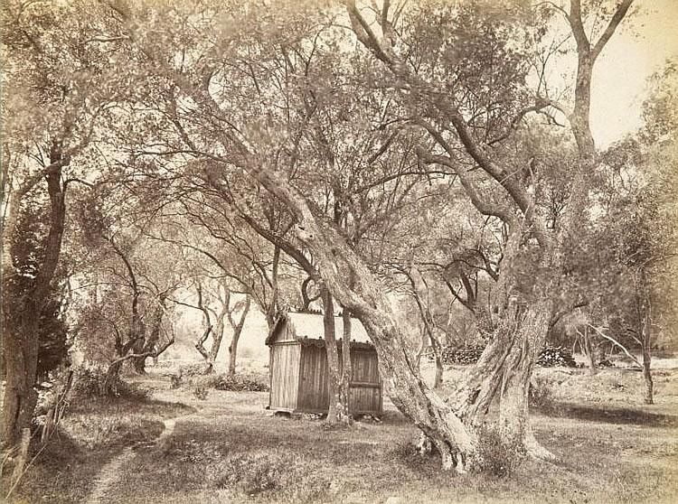 Jean GILETTA (1856-1933)Etude d'oliviers, vers 1880.Tirage albuminé.20 x 27,5 cm.