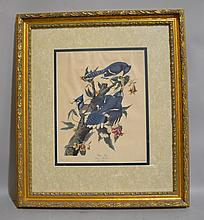 AUDUBON PRINT OF BLUE JAYS. No. 21. Plate CII. matted in gilt wood frame. Marked: Blue Jay Corvus Cristatus Male. 1, female 2.3. William Coverdale Collection of Canadiana. Size; 32 1/2''H, 28''W. Condition: age appropriate wear.